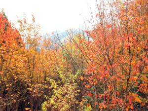 川上地区から宍粟市へ抜ける道の紅葉